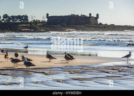 Sea gulls on a beach of Nevogilde district beach in porto city, Portugal. Fort of Sao Francisco do Queijo (so called - Stock Photo