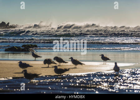 Flock of sea gulls on a beach of Nevogilde district in porto city, Portugal - Stock Photo