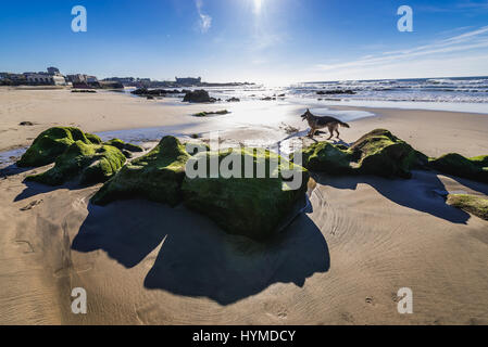 Mossy rocks on the beach of Nevogilde civil parish in Porto, second largest city in Portugal - Stock Photo