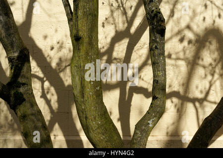 Tree trunks and bare branches casting shadows forming an abstract design on a yellow wall - Stock Photo
