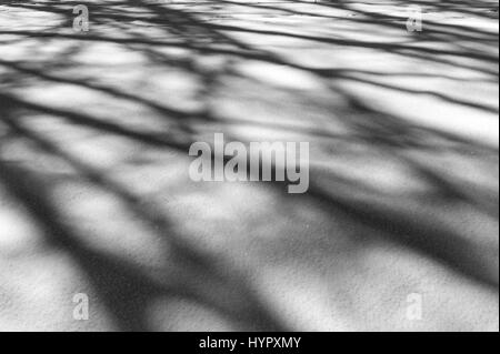 Black & white image of trees that create abstract shadow patterns on fresh snow