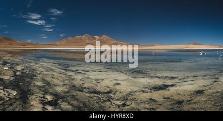 Panoramic view of a few pink flamingos in Laguna Cañapa, a endorheic salt lake in the Potosí Department of southeastern - Stock Photo