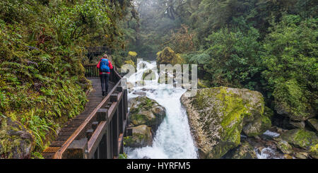 Hiker on wooden walkway along the river, way to Lake Marian, Fiordland National Park, Te Anau, Southland Region, - Stock Photo