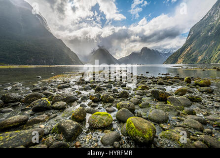 Moss covered stones, Miter Peak, Milford Sound, Fiordland National Park, Te Anau, Southland Region, Southland, New - Stock Photo