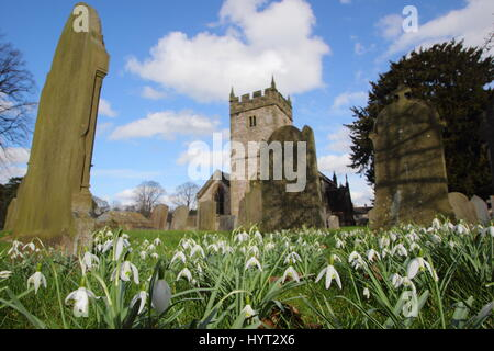 Snowdrops (galanthus nivalis) in the graveyard of a scenic English village Parish Church near Bakewell, Peak District - Stock Photo