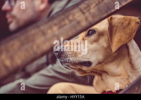 Dog and hiker sitting on the stairs of hikers rest cabin - Stock Photo