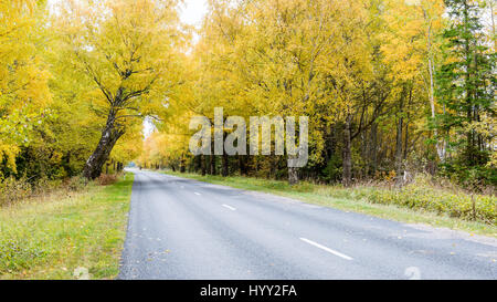 empty road in the countryside with trees in surrounding. perspective in autumn - Stock Photo