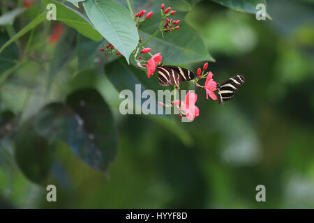 Butterfly Park near Benalmadena Costa del Sol Andalucia Spain - Stock Photo
