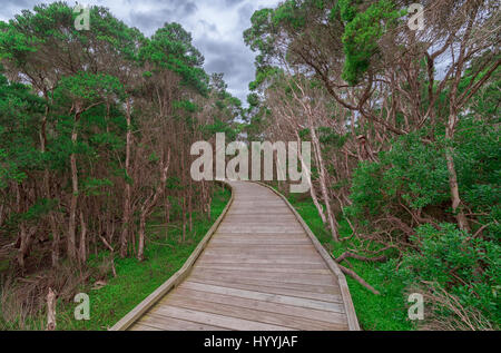 Beautiful wooden walkway / boardwalk leading through a small forest with bright green trees on both sides - Stock Photo