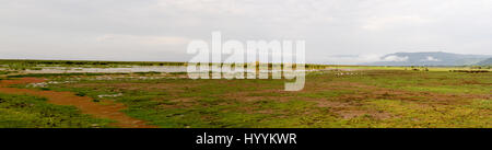 Panorama of wetlands with migrating yellow billed storks and other waterfowl Lake Manyara National Park, Tanzania, - Stock Photo