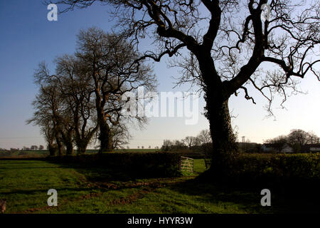 Hedgerow and gate in farmland with oak trees. - Stock Photo