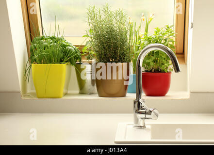 herbs growing in kitchen - Stock Photo