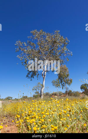 The Central Desert in Bloom, Northern Territory, Australia - Stock Photo
