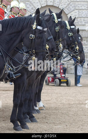 Horse sticking out its tong from the Household Calvary at Horseguards Parade London England - Stock Photo