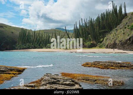 New Caledonia coastline, beach with Araucaria pines in Turtle bay, Bourail, Grande Terre island, south Pacific - Stock Photo