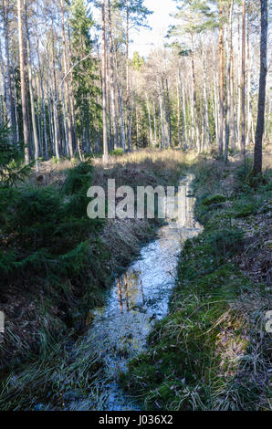 Drainage by an open ditch in the woods - Stock Photo