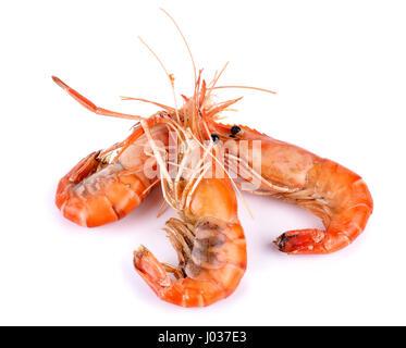 Shrimp isolated on white background. - Stock Photo