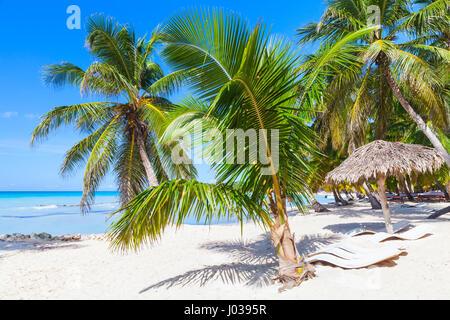 Coconut palms, empty loungers and umbrella are on white sandy beach. Caribbean Sea, Dominican republic, Saona island - Stock Photo