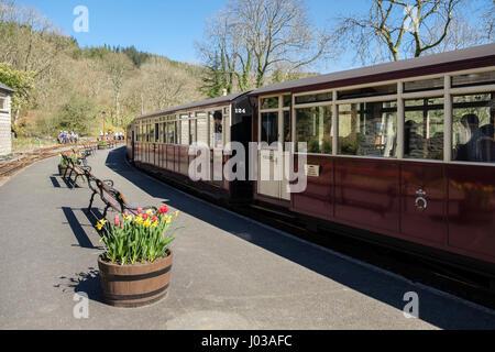 Train leaving platform in station on heritage narrow-gauge Ffestiniog Railway line at Tan-y-Bwlch, Gwynedd, North - Stock Photo