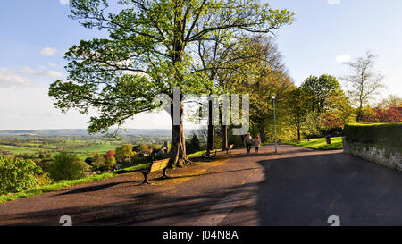 The hilltop avenue of trees on Park Walk in Shaftesbury, Dorset. - Stock Photo