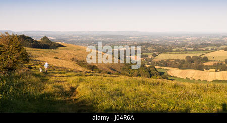 Shaftesbury, England - July 28, 2012: A man walks a dog in early morning light on Fontmell Down, a chalk hill overlooking - Stock Photo
