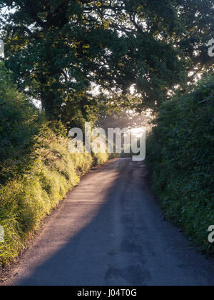 Early morning light shines through trees and lush verge vegetation on narrow country lanes in the Blackmore Vale district of Dorset.