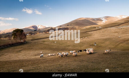 The round and folded worn mountains of the Howgill Fells on the edge of the Yorkshire Dales National Park in Cumbria, - Stock Photo