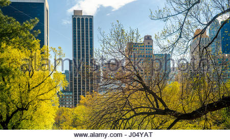 Skyscrapers seen through the trees in Central Park, New York, USA. - Stock Photo