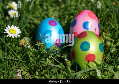 easter eggs and daisy flowers in grass meadow - Stock Photo