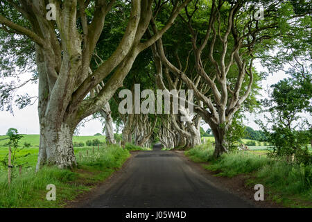 The Dark Hedges, near Armoy, County Antrim, Northern Ireland, UK - Stock Photo