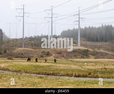 Horses in field with overhead electricity grid power lines  Model Release: No.  Property Release: No. - Stock Photo