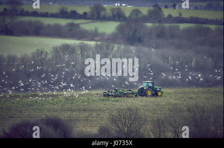 A tractor ploughing a field in winter on the South Downs with feeding gulls - Stock Photo