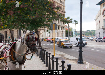 A horse Equus ferus caballus wearing a harness to pull a wagon at Plaza de San Francisco with cars driving by along - Stock Photo