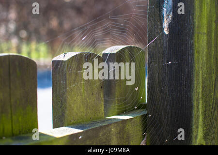 spider web on a wooden fence in the afternoon - Stock Photo