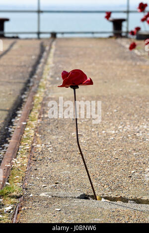 Lone poppy of Poppies Wave section of Blood Swept Lands and Seas of Red originally installed at the Tower of London. - Stock Photo