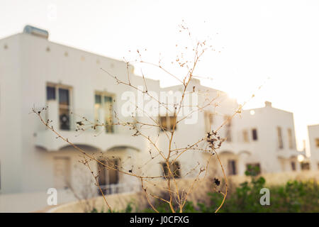 blur image of houses in the village for background usage . Branch in the foreground in focus - Stock Photo