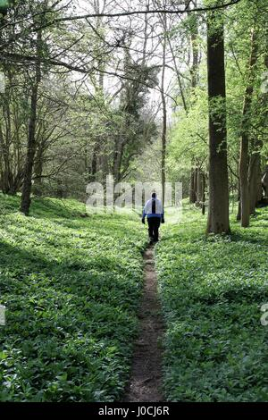 A lone walker going through lush greenery in a wood - Stock Photo