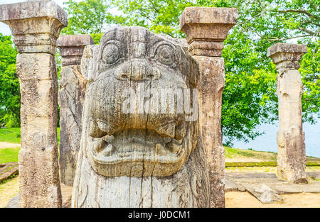 The head of the stone  roaring lion in King's Council Chamber of archaeological site of Nissanka Malla Palace, Polonnaruwa, - Stock Photo