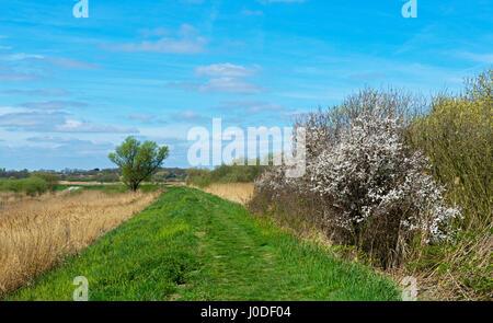 Carlton Marshes, a Suffolk Wildllife Trust nature reserve, near Oulton Broad, Suffolk, England UK - Stock Photo