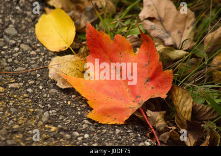 leaf on the ground with grass and blacktop as background. seasonal - Stock Photo