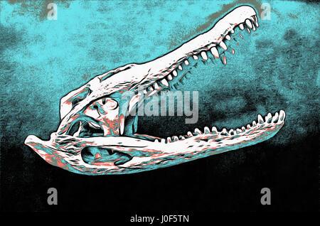Aligator mississipiensis (Daudin), Mississippi alligator skull, photo - Stock Photo