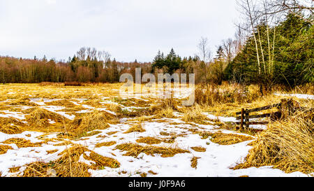 Winter landscape of grass fields in Campbell Valley Park in the township on Langley in British Columbia, Canada - Stock Photo