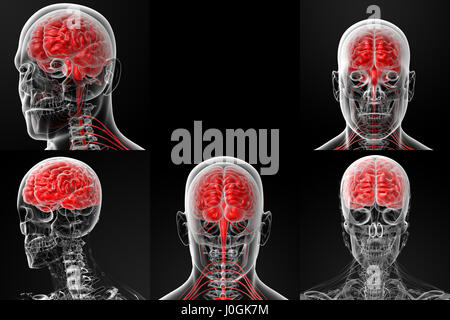 3d rendering illustration of the male brain - Stock Photo