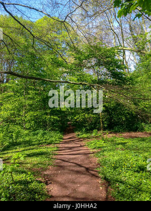 Antony, France, Parc de Sceaux, Spring pathway in Woods - Stock Photo