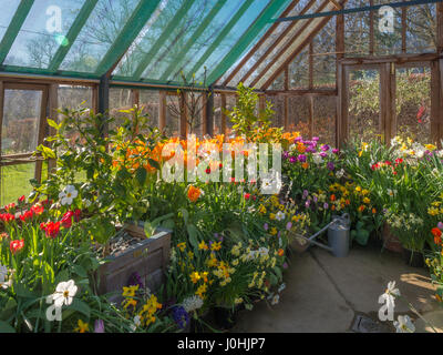 Greenhouse full of spring flowers - Stock Photo
