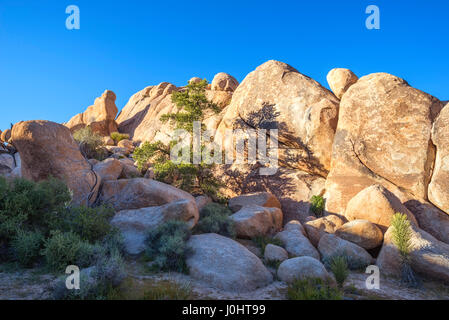 Pine tree and rock formations on the Barker Dam Loop Trail. Joshua Tree National Park, California, USA. - Stock Photo