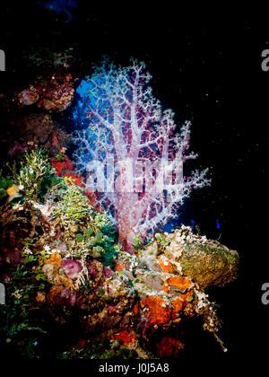 Weno, Micronesia. 14th Feb, 2016. Heian Maru halcyon - Truk Lagoon. Credit: Alessandro Bosio/Pacific Press/Alamy - Stock Photo
