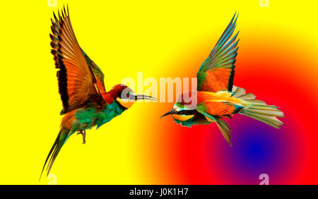 pair of colored birds on colored background with circles,natural wonders and beautiful colors - Stock Photo