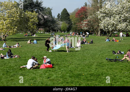 People relaxing on sunny day enjoying spring blossoms in Bute Park, Cardiff Wales UK  KATHY DEWITT - Stock Photo
