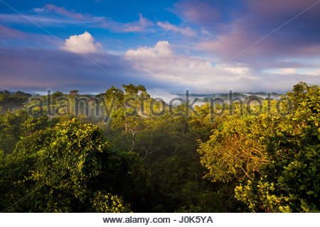 Early morning in the rainforest of Soberania national park, Republic of Panama. - Stock Photo